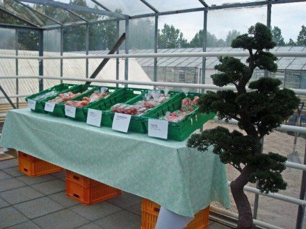 Heidmork vegetable stand